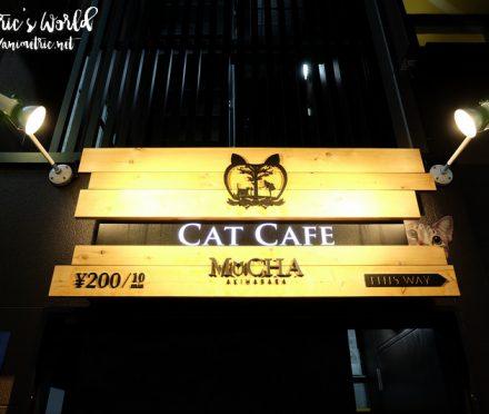 Cat Cafe Mocha Akihabara Japan