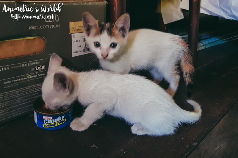 Adopting Kittens